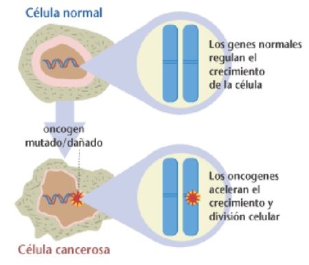 cancer-celulas